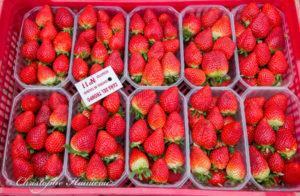 fraises-espagnoles